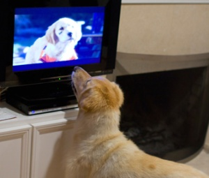 dog-barking-at-TV-alamy-BGT518-335sm111212