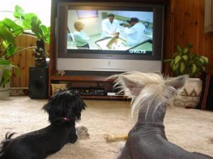 dogs-watching-tv-300x224