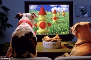 Dogs-Watching-TV1-thumb-550xauto-89266-300x199