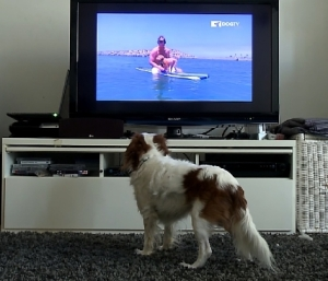 DOGTV_watchingTV
