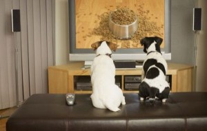 what-do-the-dogs-see-when-watching-tv05
