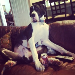 great dane on couch